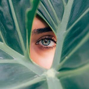 eye leaf dry eyes 2_300px