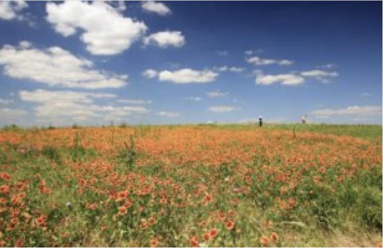 flower mound in Flower Mound