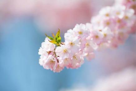 Pink Flower Blossom