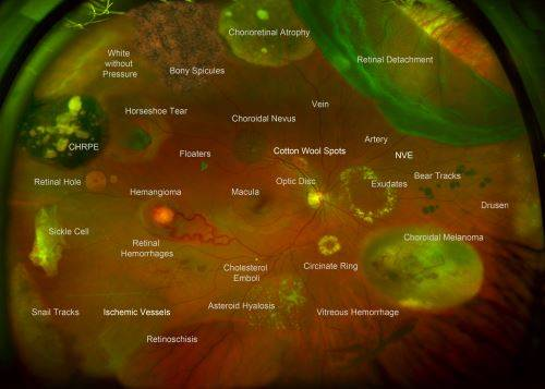 Color Diagnostic Atlas