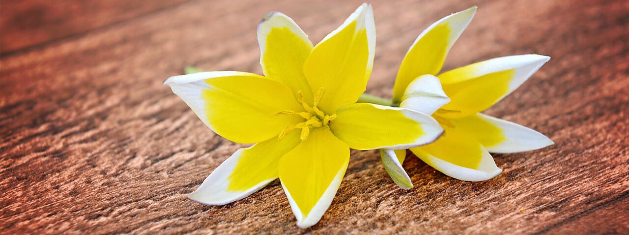 Yellow-Flowers-on-Wood-1280-x-480