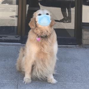 Feinstein Eyecare 4 cropped safety mask