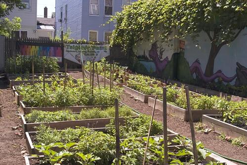 CHS9 Community Garden