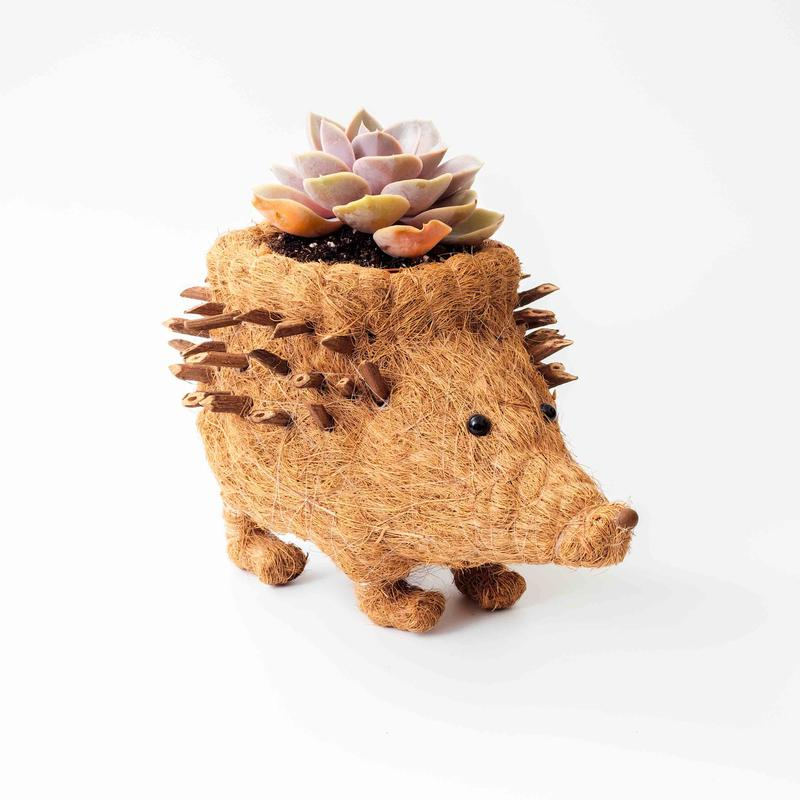 Hector the Hedgehog an eco-friendly planter from LIKHÂ. Photo courtesy NY NOW.