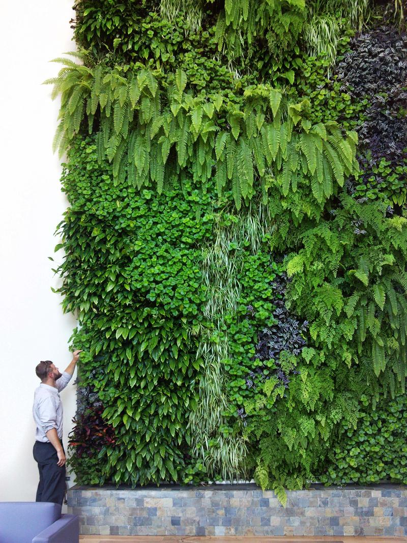 One of Sagegreenlife's living walls.