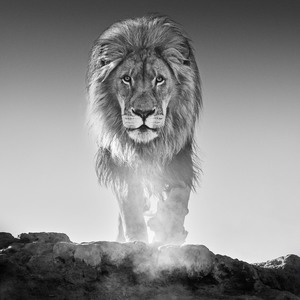 Isabella Garrucho Gallery Grand Opening Featuring Photographs From David Yarrow