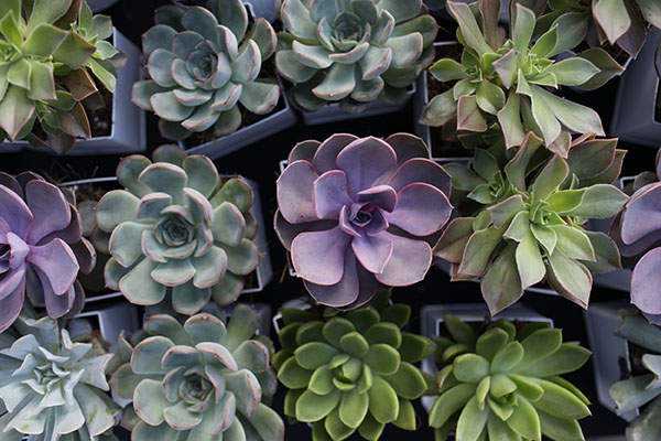 Succulents were included in the gift bags from Benjamin Moore.
