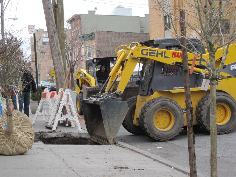 After cutting a hole in the sidewalk and excavating materials, the balled trees are placed into position by Mana Construction's Gehl skid steers.