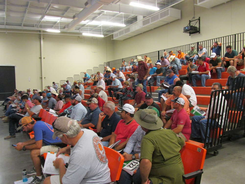 The mid-morning heat and humidity drive bidders into the air-conditioning, but it doesn't cool their enthusiasm.