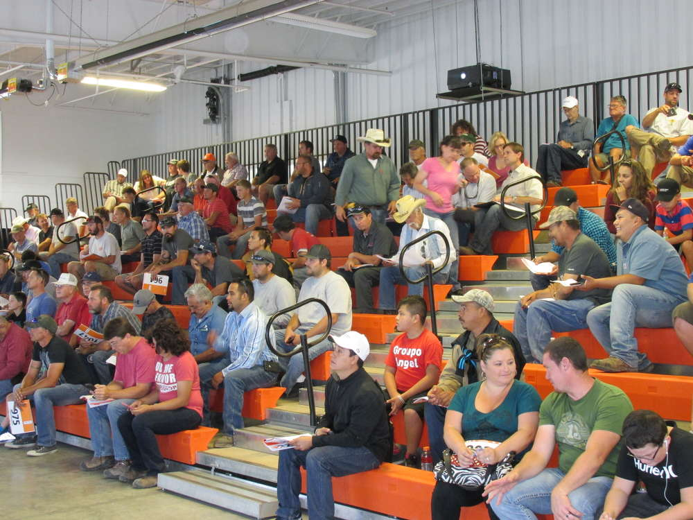 Virtual bidding was well attended with the unseasonably cool August weather.