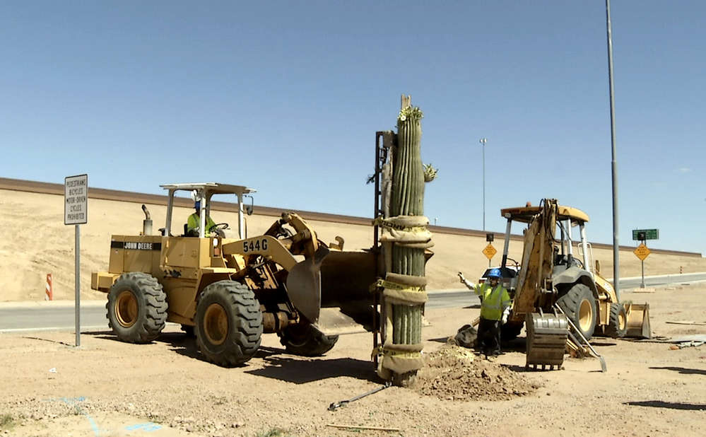 Construction crews worked in recent months to transplant large saguaros, other cacti and trees that had temporarily been stored in nurseries near the freeway.