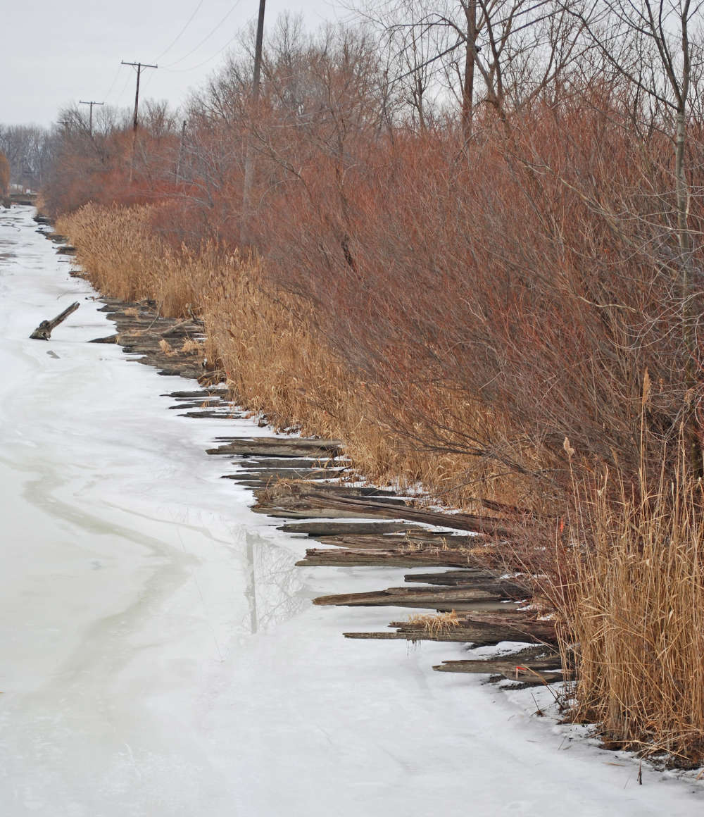 Photo by Andrew Jameson. Remains of Corduroy Section of Hulls Trace, southern Wayne County MI
