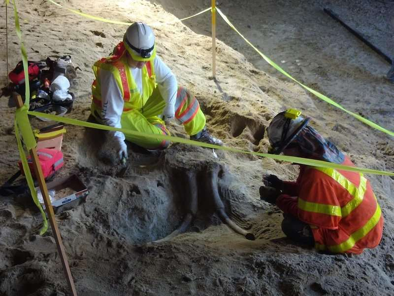 A partial skull of an ancient elephant uncovered in a new L.A. Metro station.