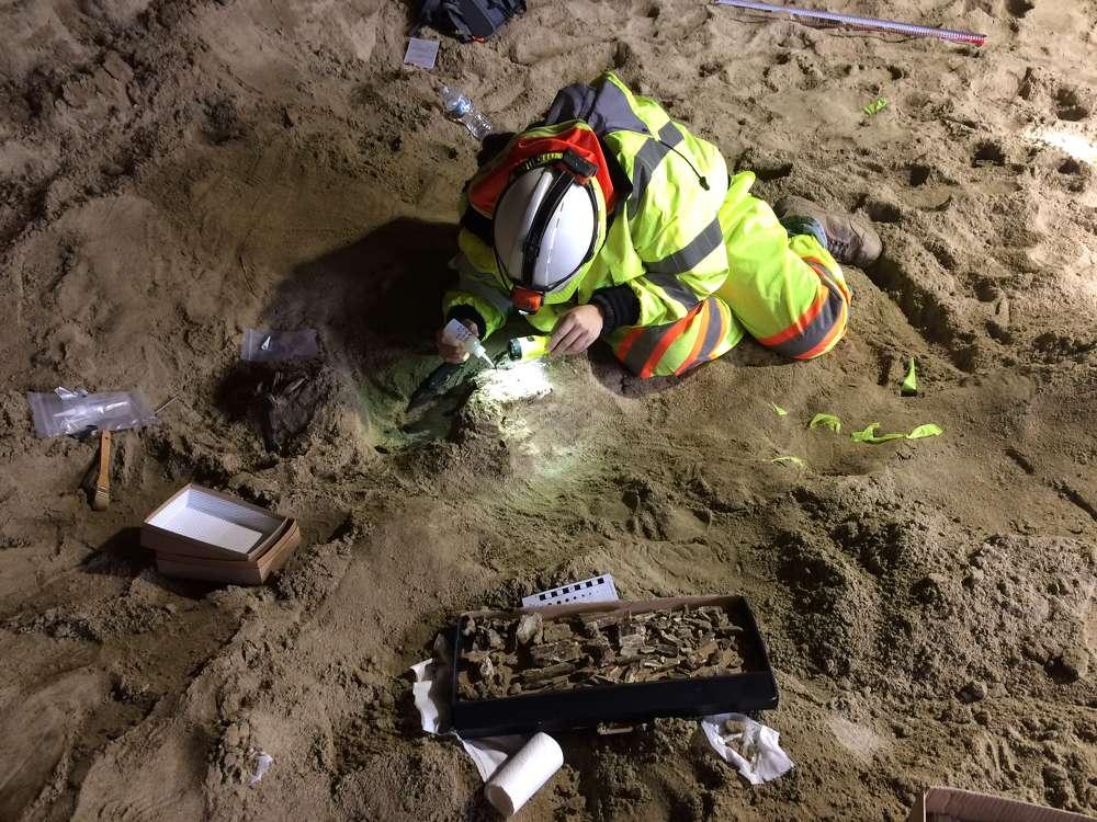 A paleontologist preps fossils for removal.