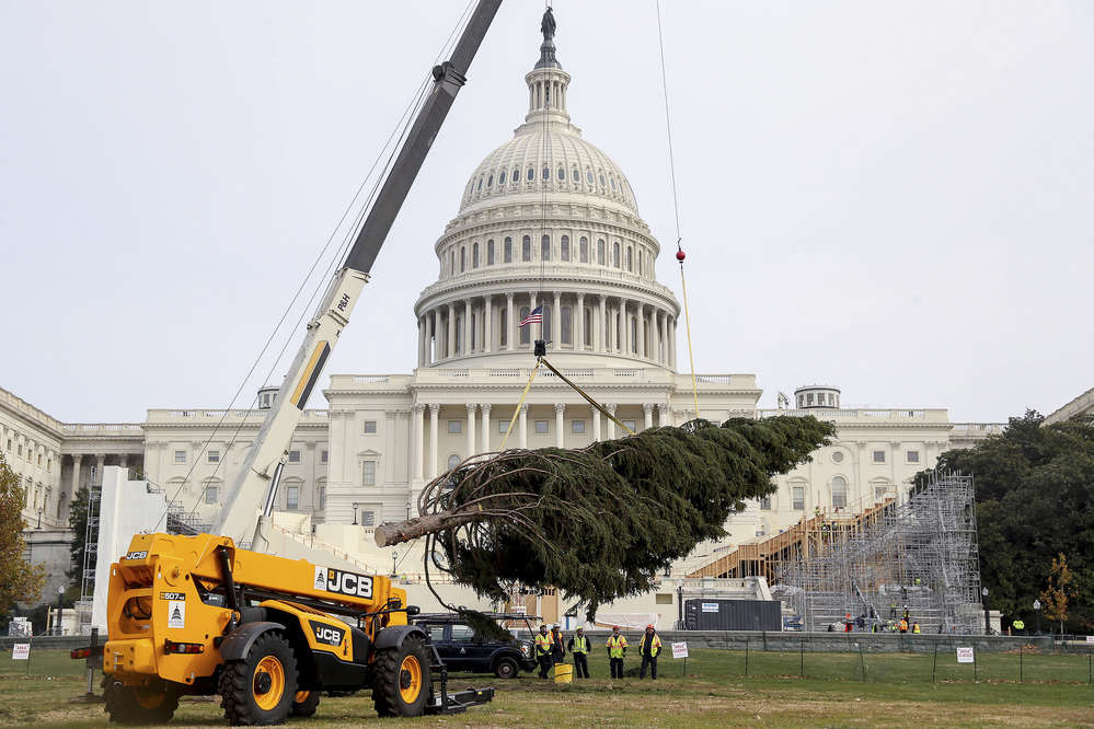 A JCB 507-42 Loadall helped install an 80 ft. Englelmann spruce on the Capitol Hill lawn.