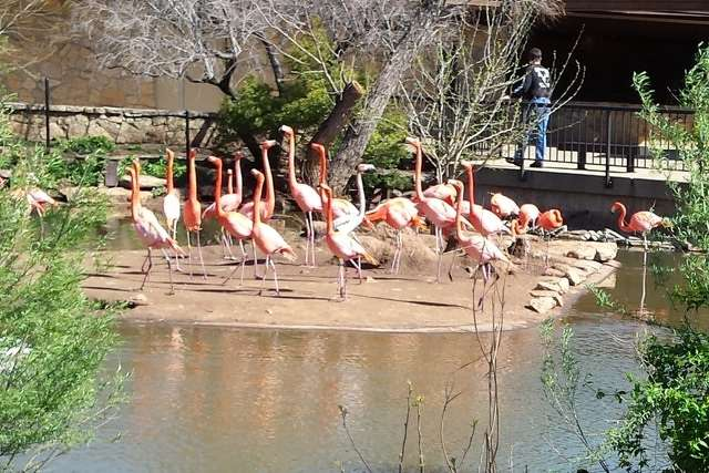A new Flamingo exhibit will be constructed near the entrance of the zoo. http://url.ie/11p1j