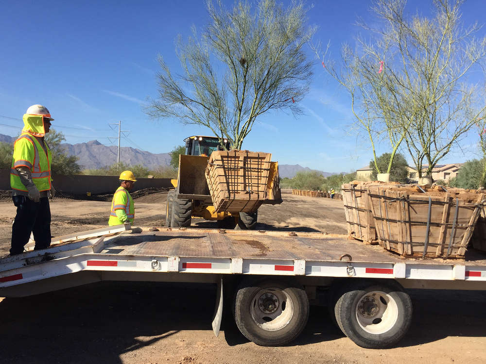 Crews took inventory of native plants along the Pecos Road right of way that could be removed, stored, maintained and eventually replanted.