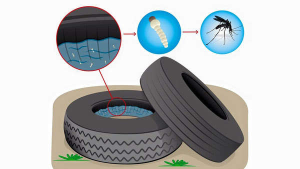 A tire that sits on the ground collecting rainwater can be a breeding area for mosquitos and help the Zika virus spread. http://url.ie/11pxg