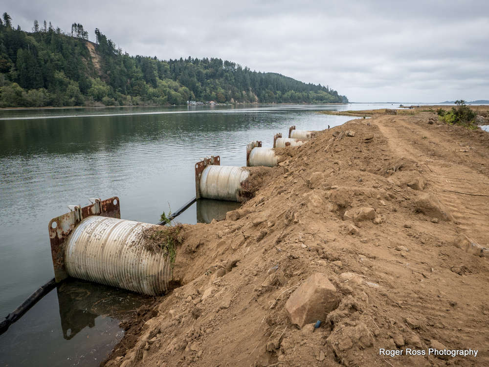 By taking out the levees that were blocking the flow of flood water, the flood plain was reconnected to the river system and bay, resulting in the reconnection of  14 mi. of ancient channels, which  provide habitat for salmon.