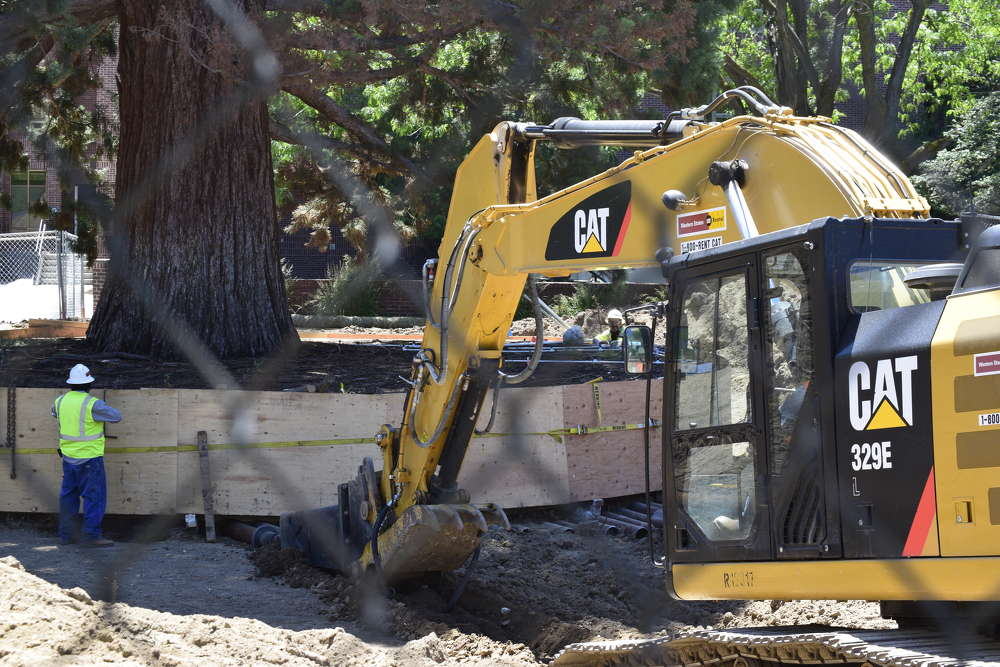 Work to move the sequoia began last fall when workers conducted a root investigation.