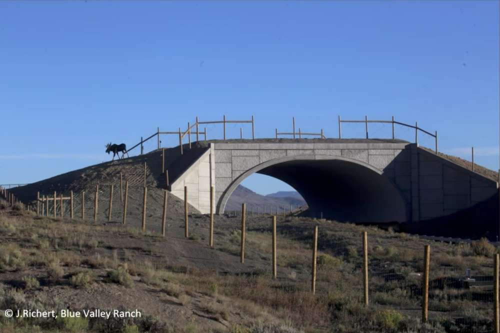 The project included two wildlife overpasses (the first in Colorado); five wildlife underpasses; 8-ft.-high wildlife exclusion fencing; wildlife escape ramps; and deer guards.