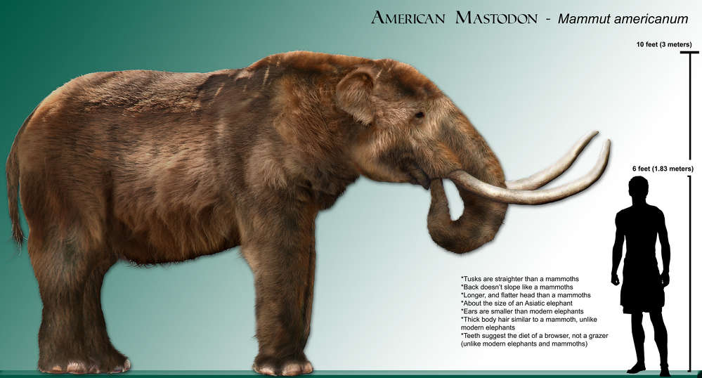 A researcher from the University of Michigan came out to the site Sept. 5, and confirmed that the bones were, in fact, from a prehistoric male American mastodon that was between 20 and 30 years old when he died.