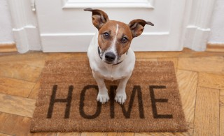 Top tips: What your pets look for in a home