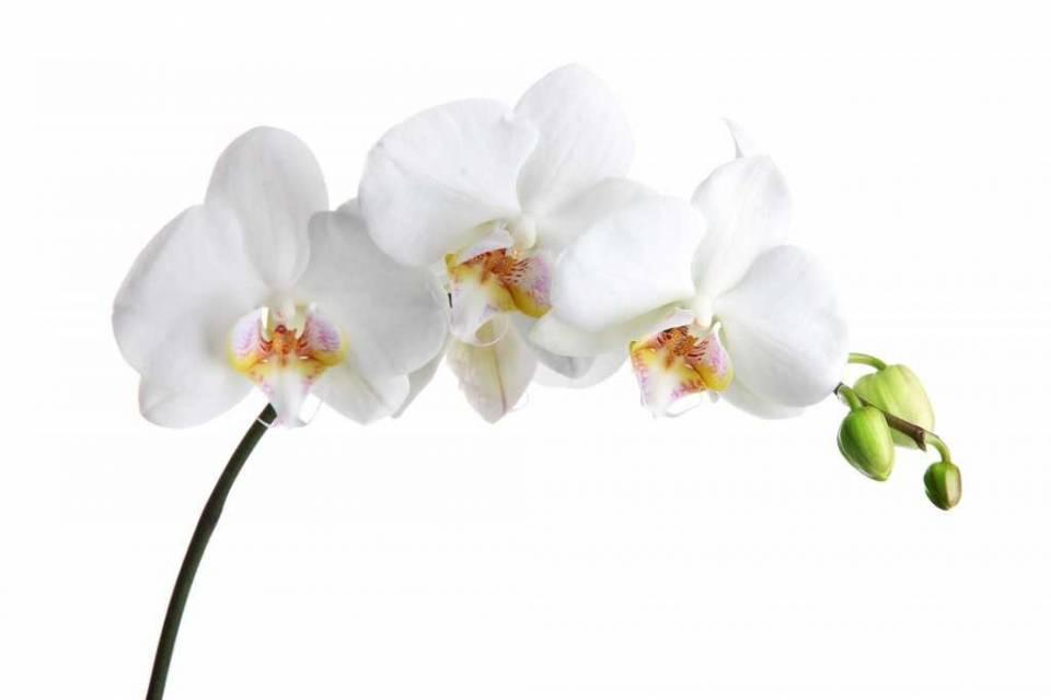 2_plants