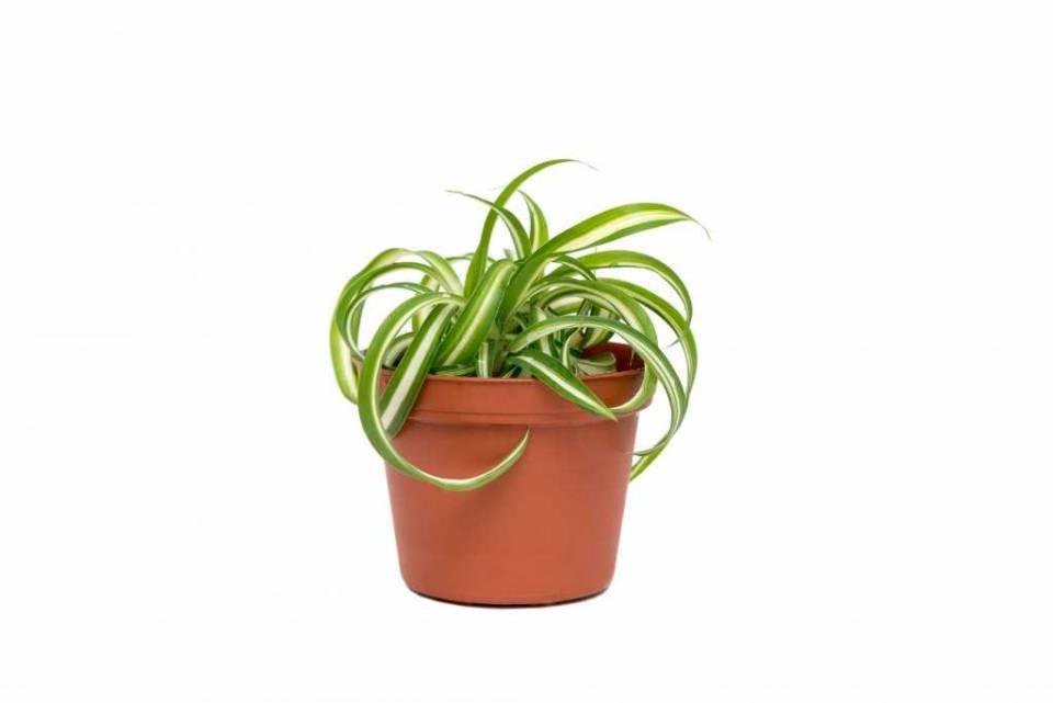 4_plants