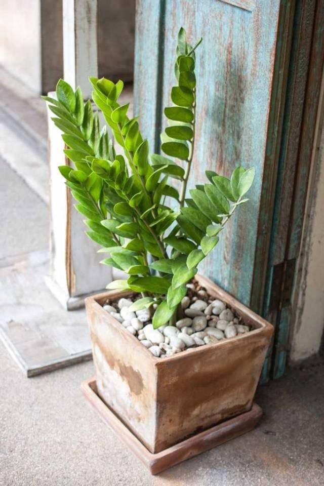7_plants