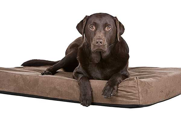 dog bed spring cleaning
