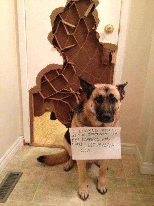 destroyed door_dog