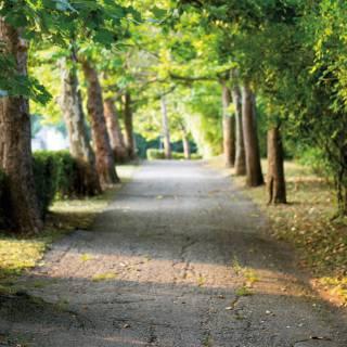 Beautiful-walking-paths-in-River-Mill