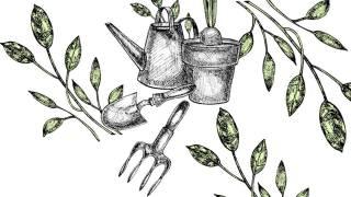 Gardening No-No's - Carson Arthur talks mishaps