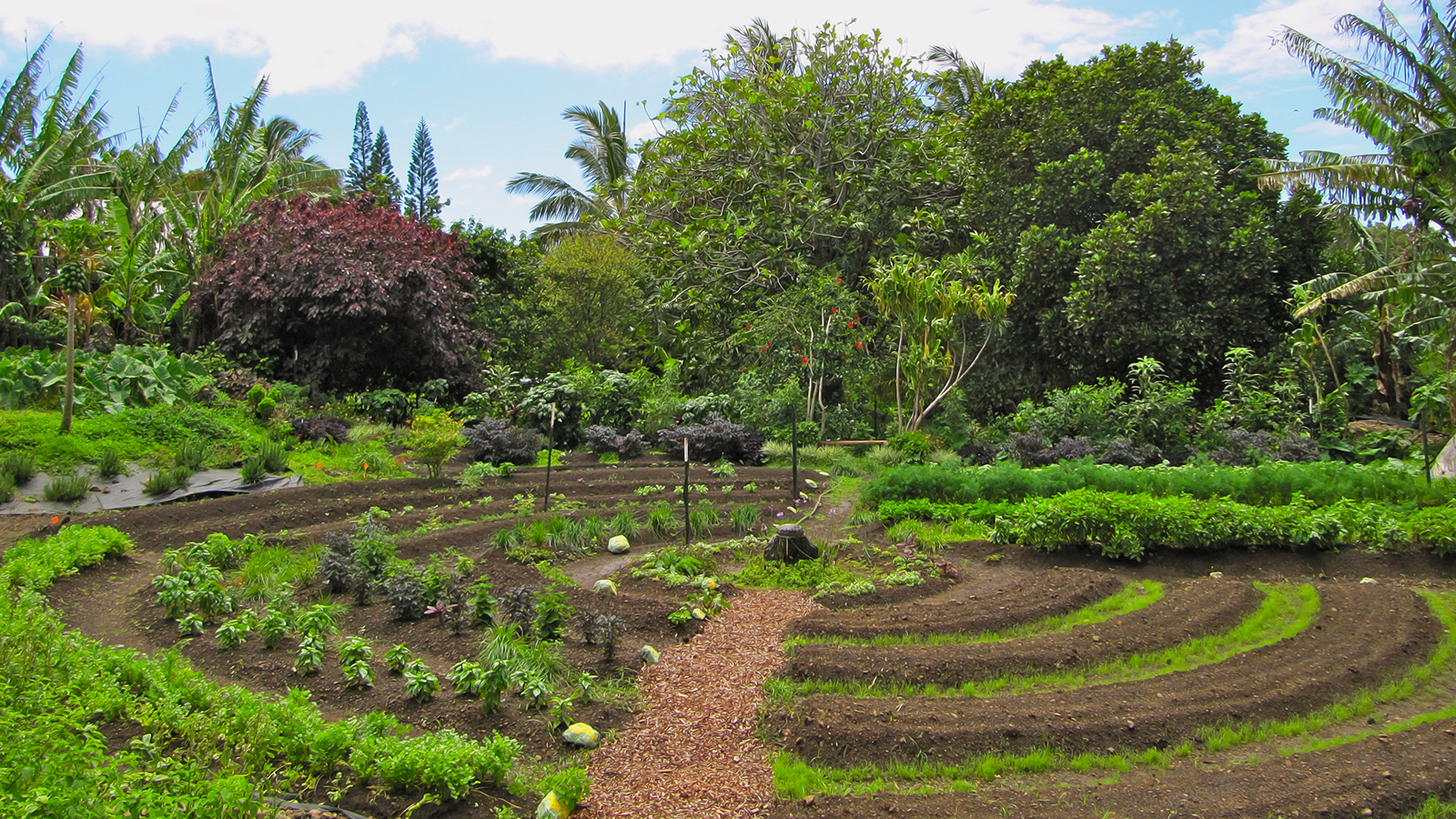 Permakulturní zahrada jak má být.