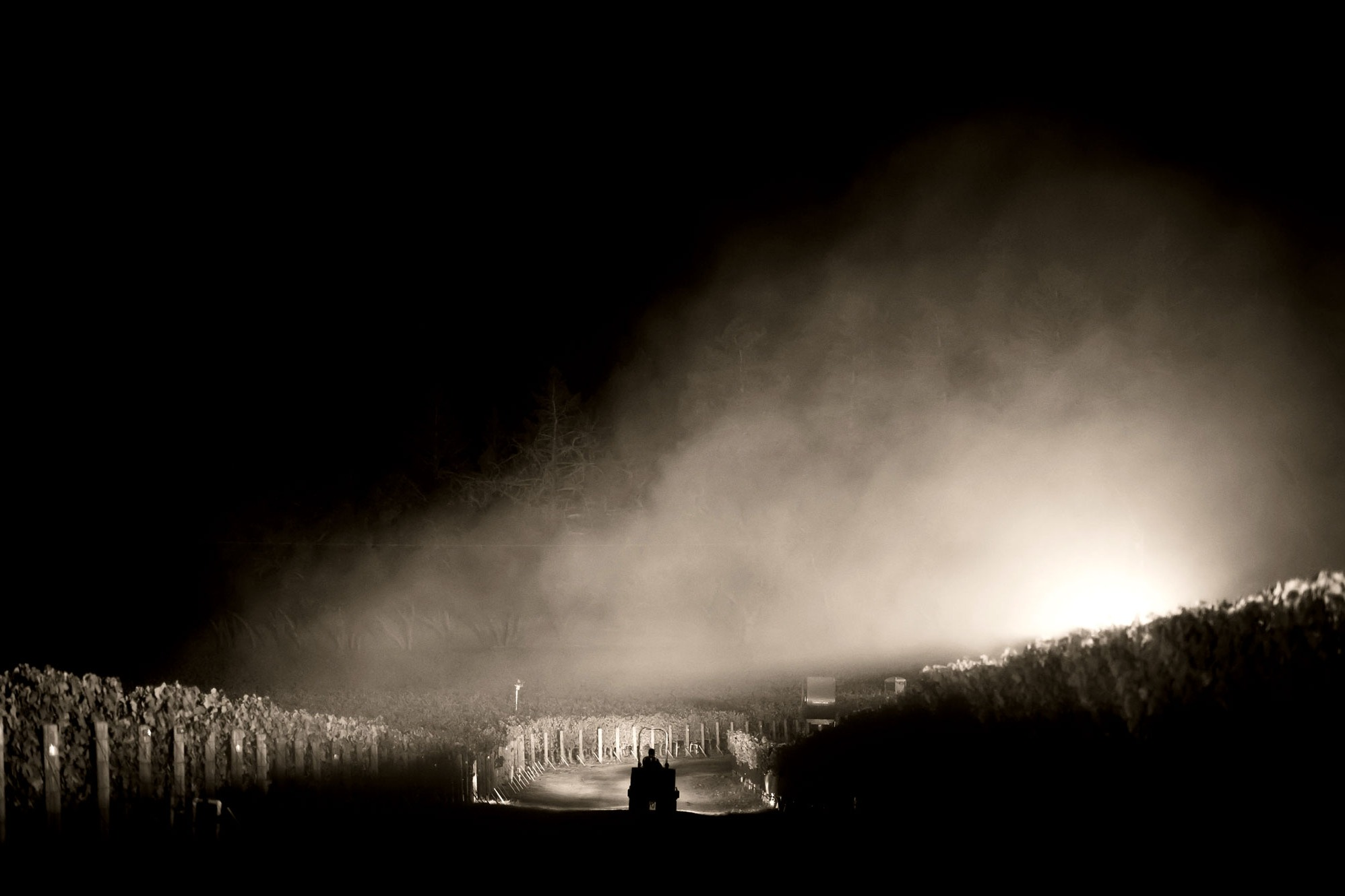 Night harvest at Ecotone Vineyard. Photo by JH Hayes