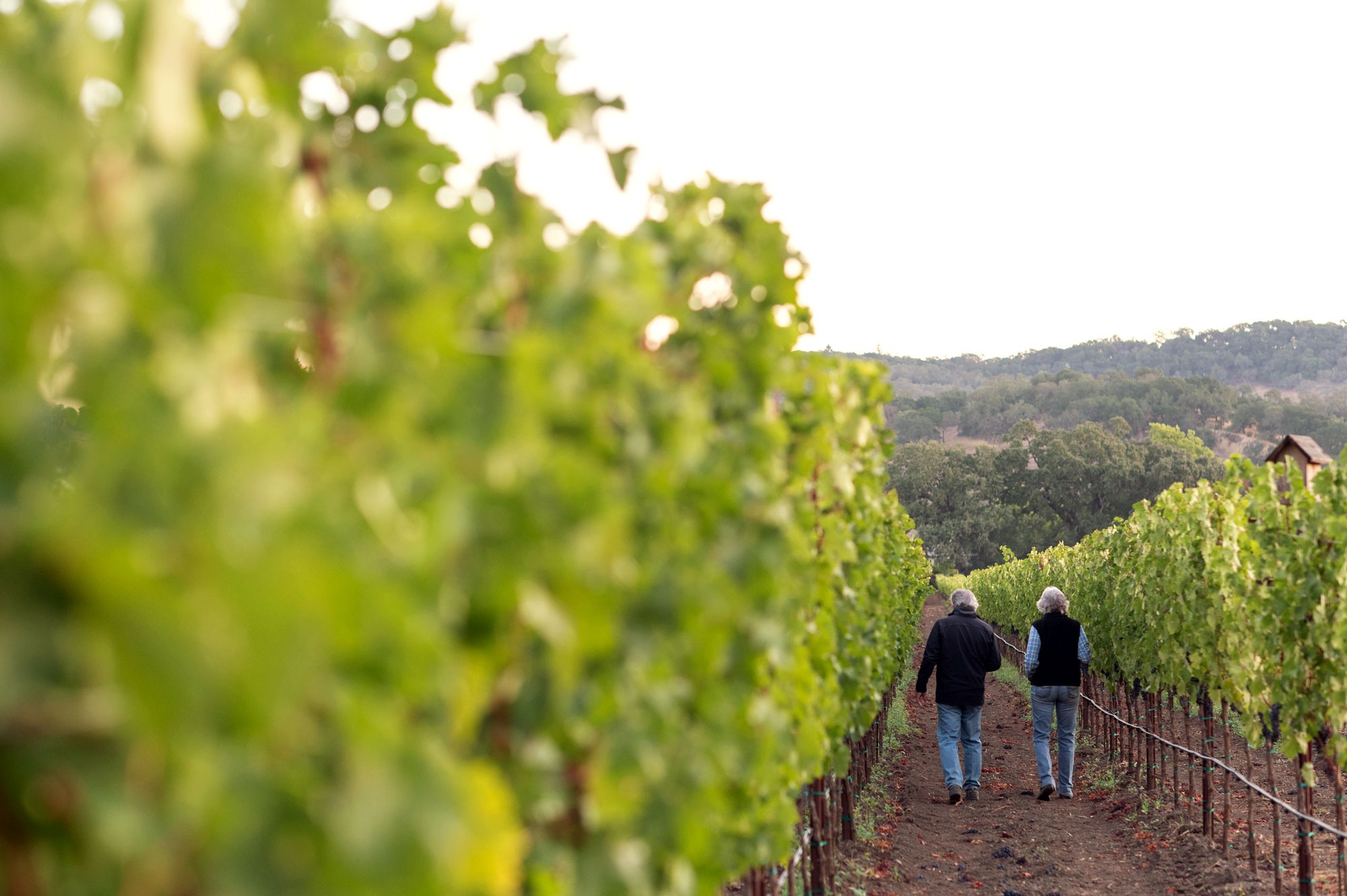 Bart walking through the vineyard at M-Bar Ranch with proprietor Liz Moffitt. Photo by JH Hayes