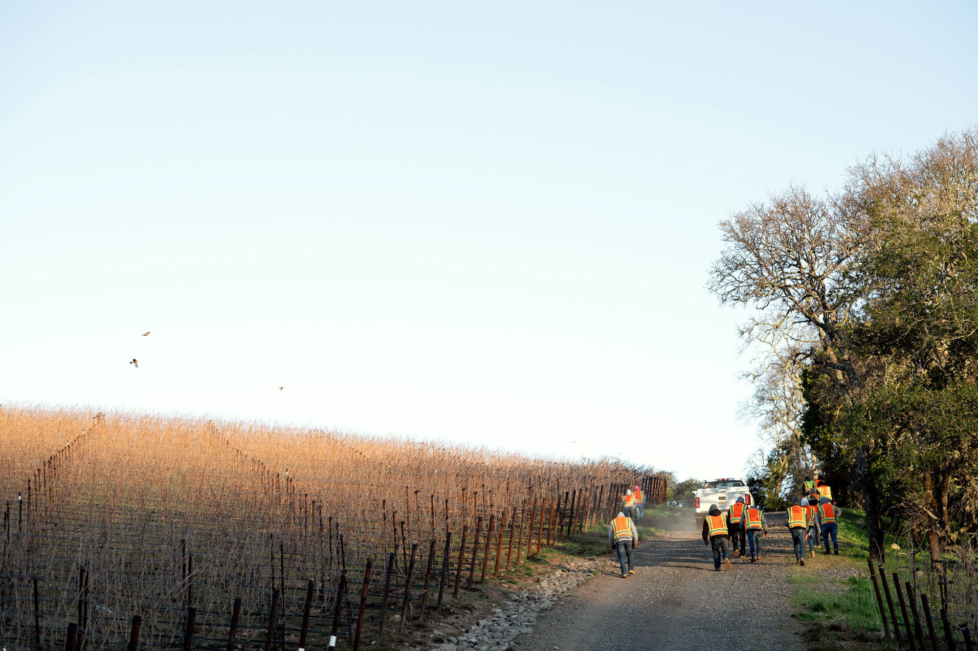 Vineyard crew ready to begin pruning at Terravina Vineyard. Photo by JH Hayes