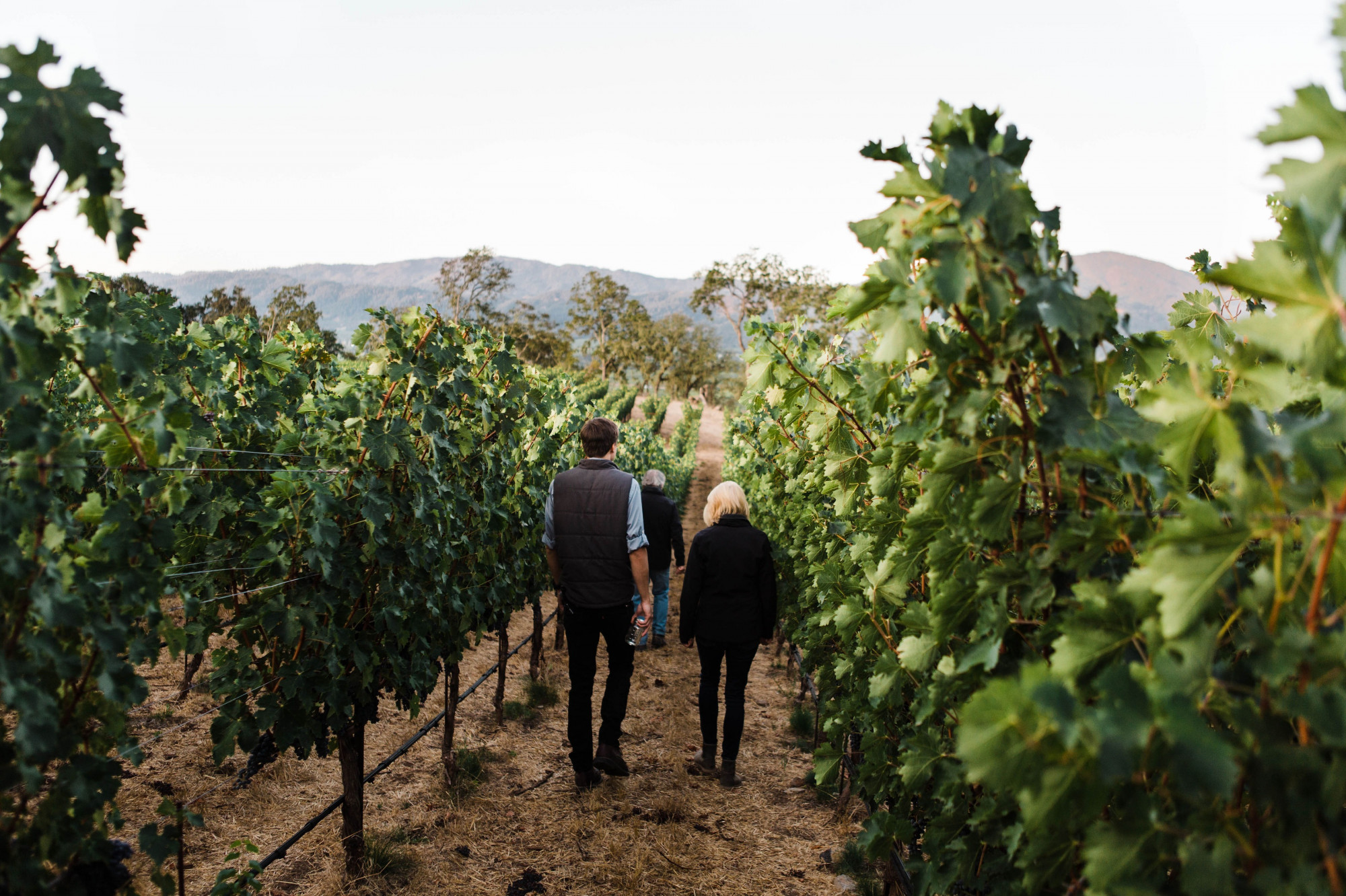 Vineyard walk with Daphne and Bart. Photo by Sarah Anne Risk