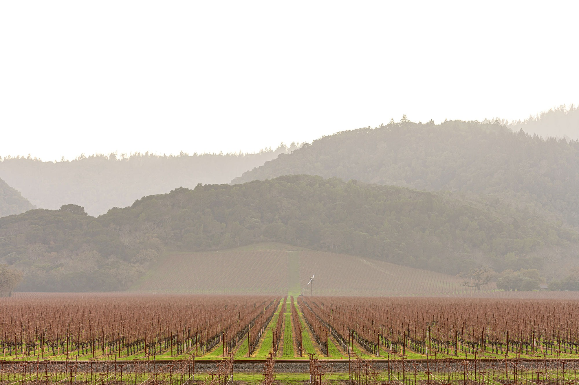 Leafless vines on a cold winter morning at Vine Hill Ranch, photo by JH Hayes