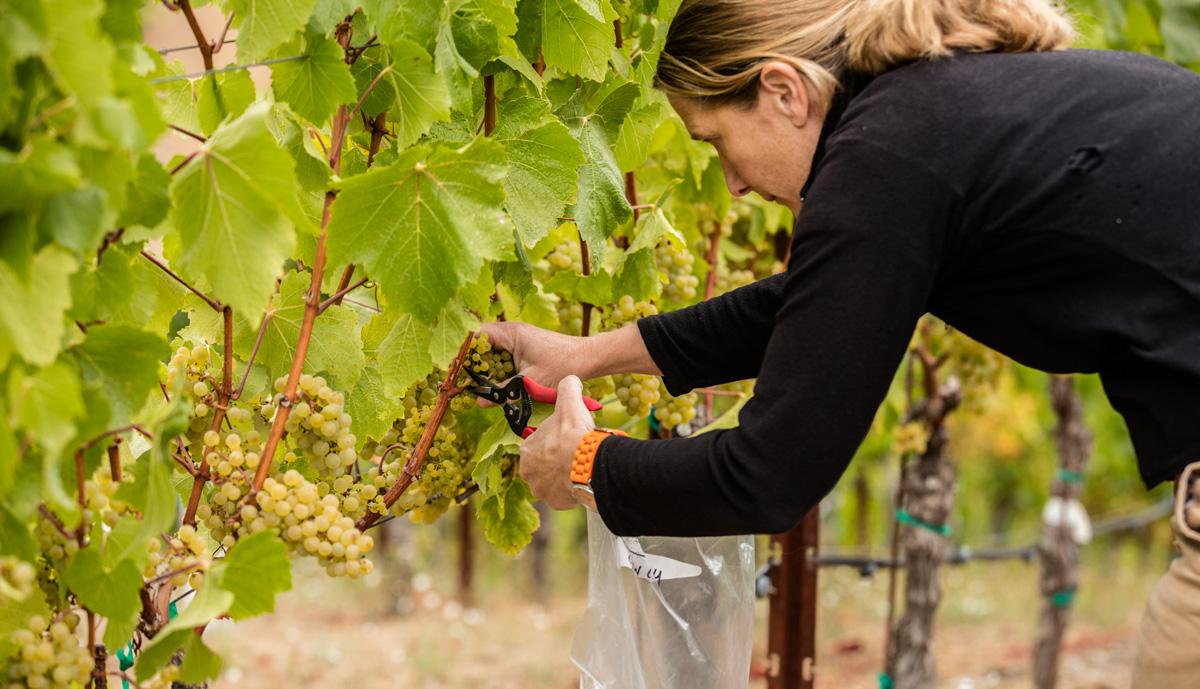 DuMOL, Sonoma California Wine Trade & Media Materials