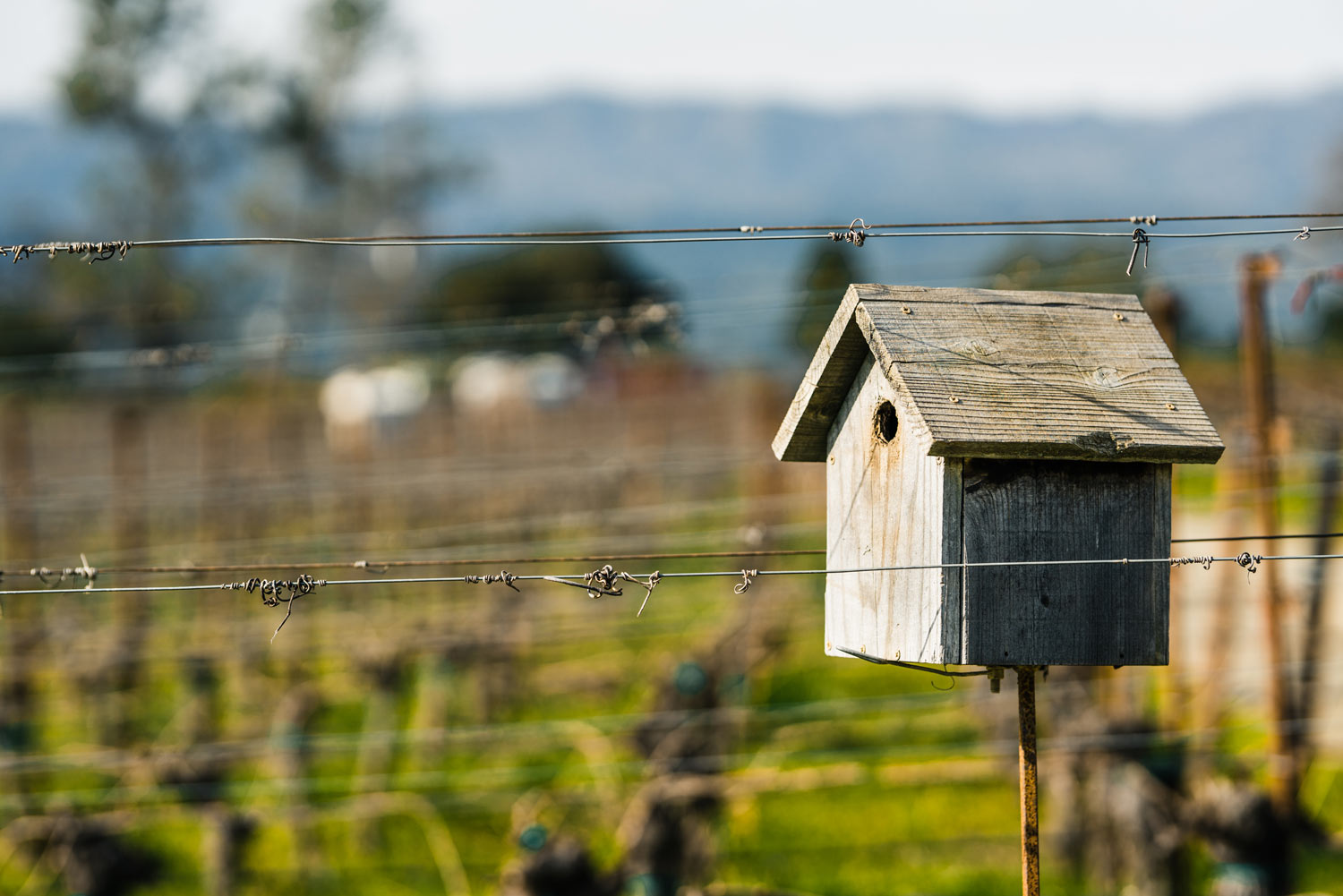 View of a bird house in the Trailside Vineyard