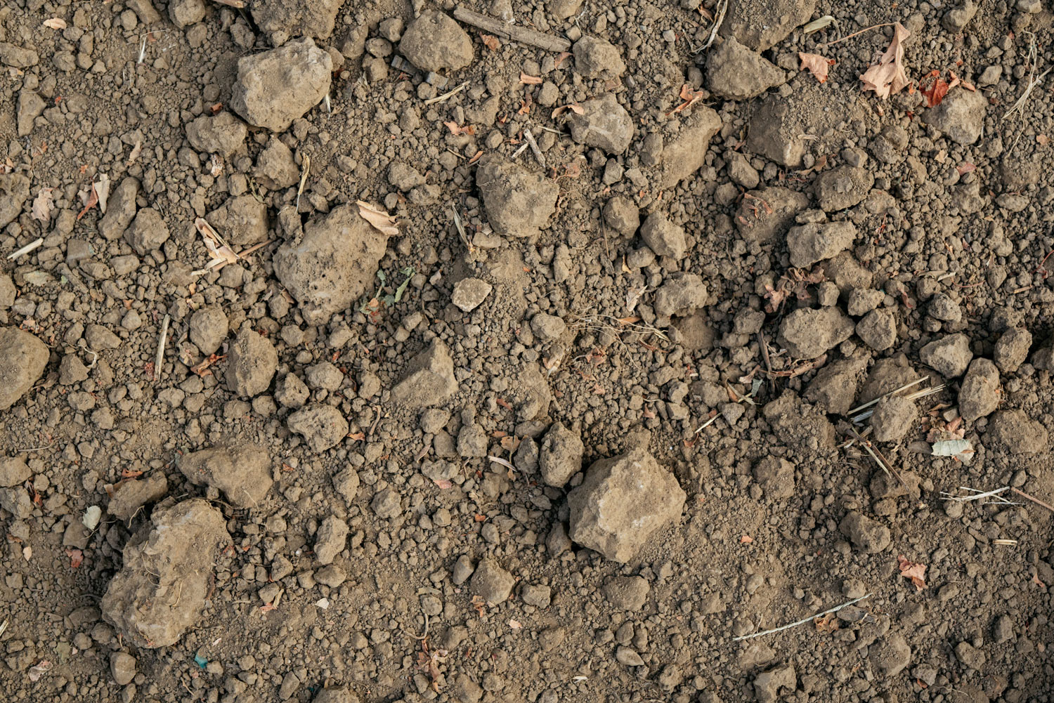 Close-up of the soil and rocks in the Trailside Vineyard