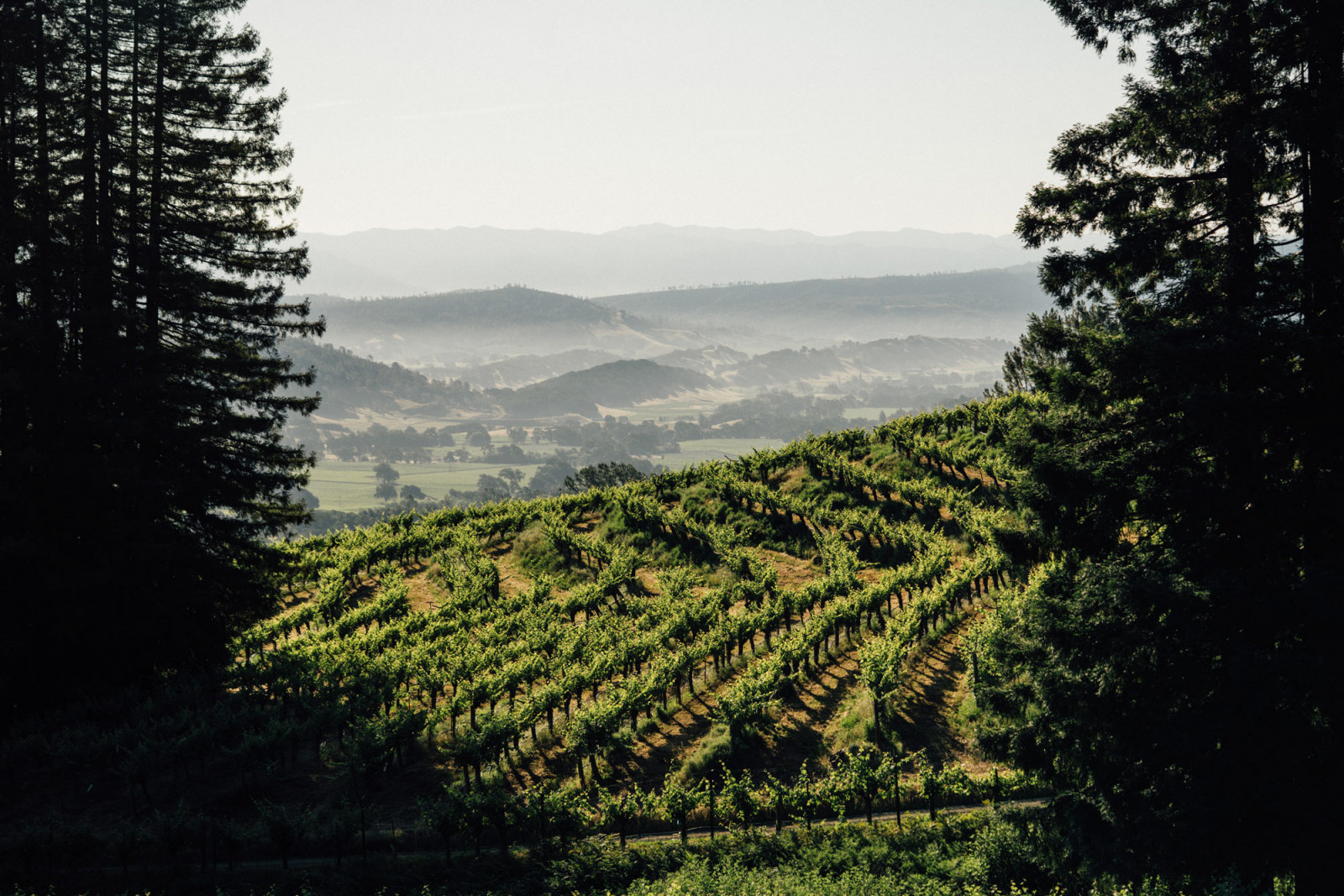 View of the Napa Valley from Ink Grade Vineyard