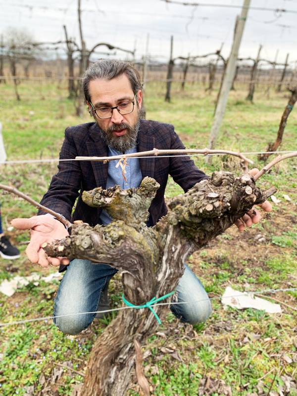 Wines from Ancient Vines