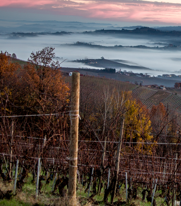 The Endless Pleasure of Piemontesi Reds