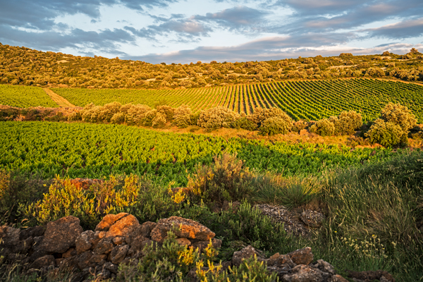 In Praise of the Languedoc