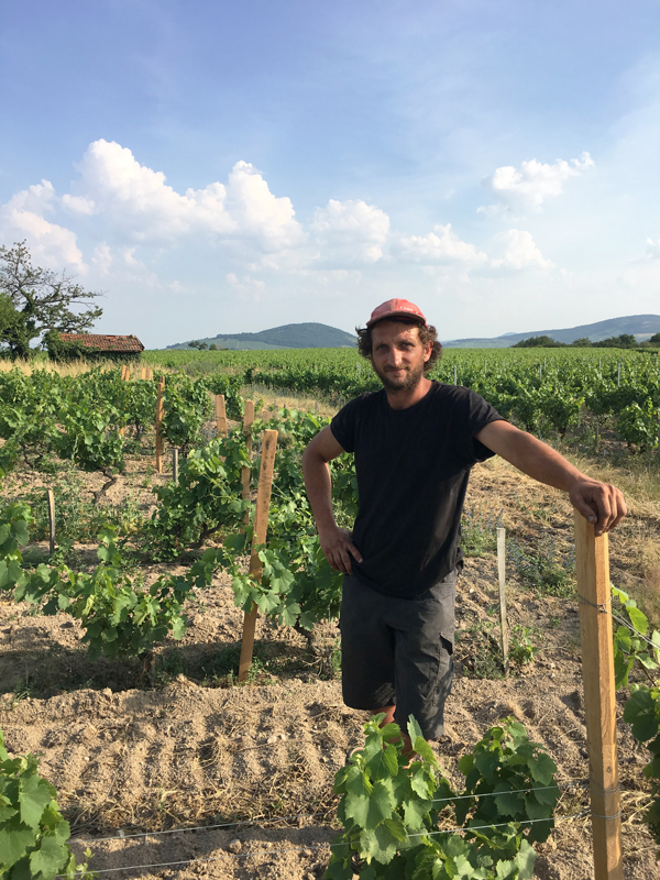 Quentin Harel: A Rising Star in the Beaujolais