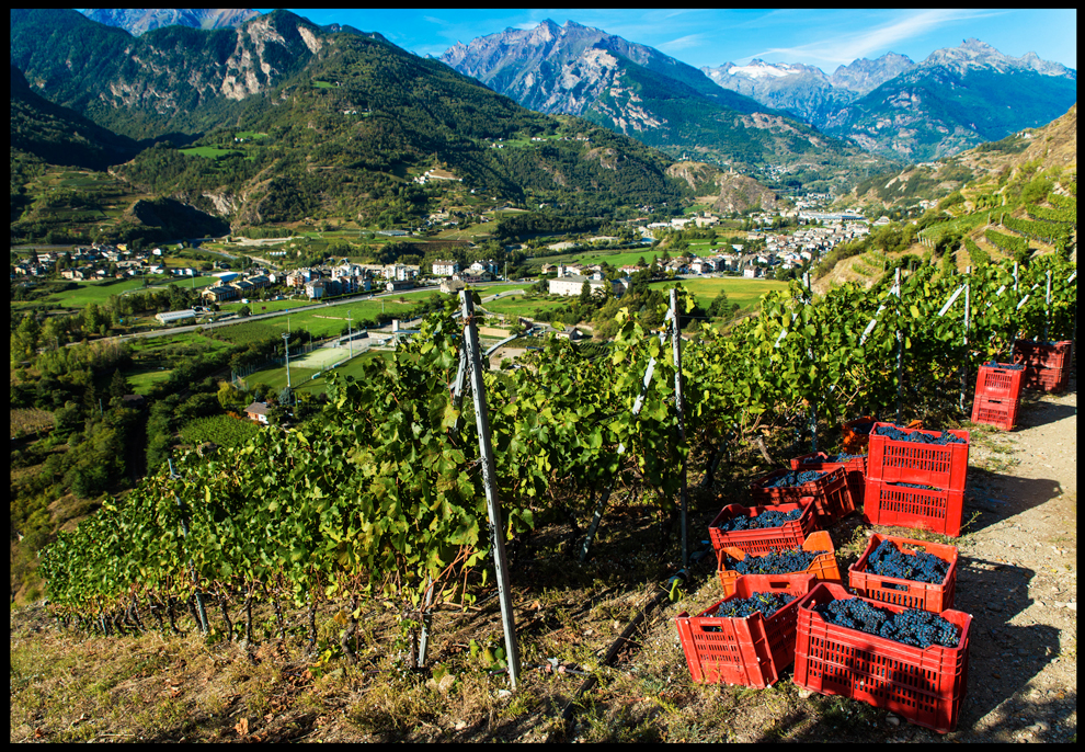 The Mountain Reds of The Aosta Valley - Dixon Brooke