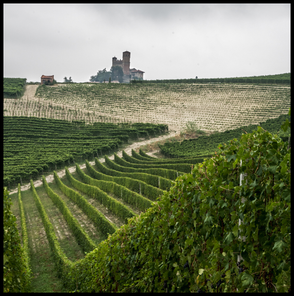 A Magical Year in Barolo
